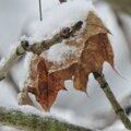 L'hiver est là!!!!!!