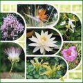 Parfum de fleurs 4