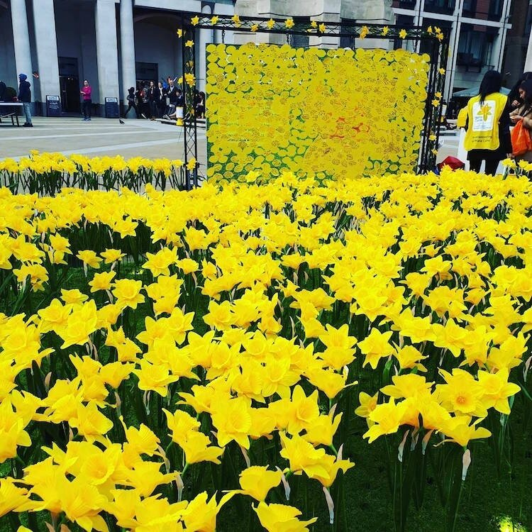 marie-curie-greyworld-garden-of-light-daffodil-installation-10