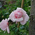 Fleur au jardin 21 06 2012 121