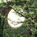 Le mur vegetal biofiltrant