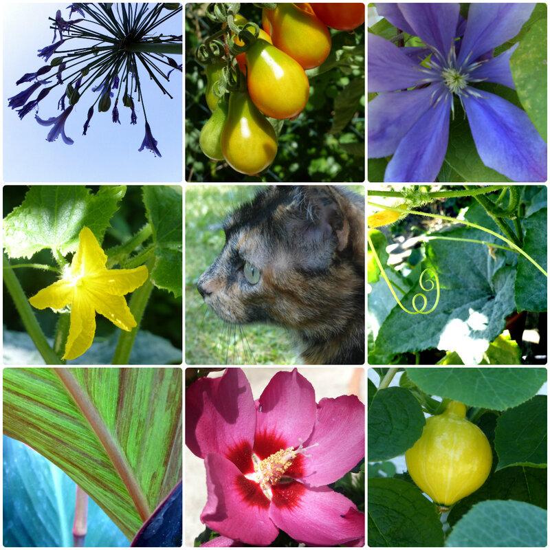 jardinnouba150818