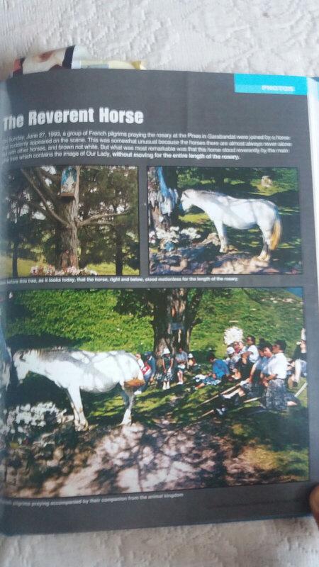 cheval aux pins