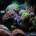 Nouvelle collaboration rédactionnelle - tester l'eau de son aquarium
