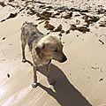 Spark 2 - chien abandonné 2 sur une plage Sud Grande Terre son état se dégrade
