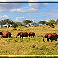 afrique-du-sud-chutes-safari