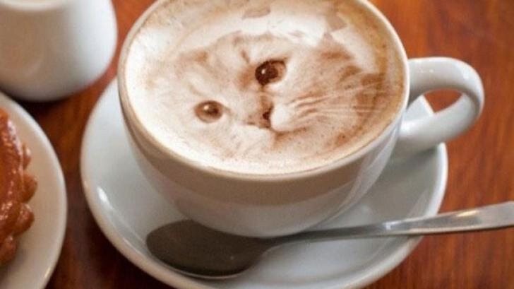 chat cafe 4