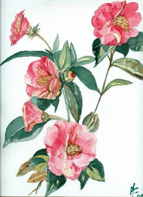 Theme Des Fleurs Aquarelles Et Dessins De Marie Claire