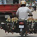 Cambodge n#14 bilan