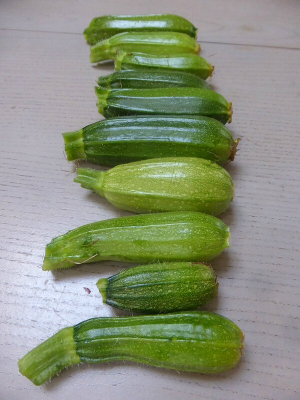 2-courgettes (2)