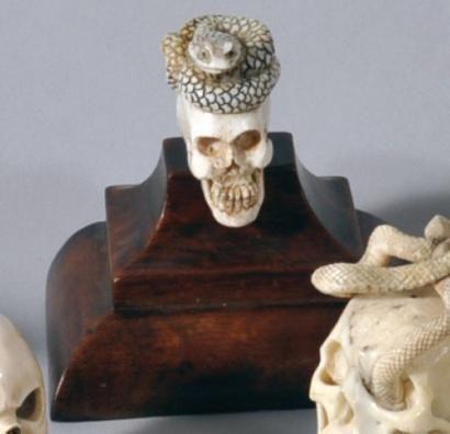 Crâne en os sculpté sommé d'un serpent enroulé. XIXème siècle. . photo Eve