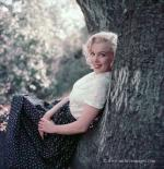 1953-09-02-LA-Laurel_Canyon-Tree_Sitting-011-1