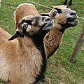 Visite du zoo de branféré épisode 5