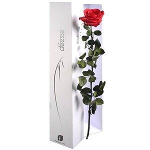 rose éternelle9436ebda