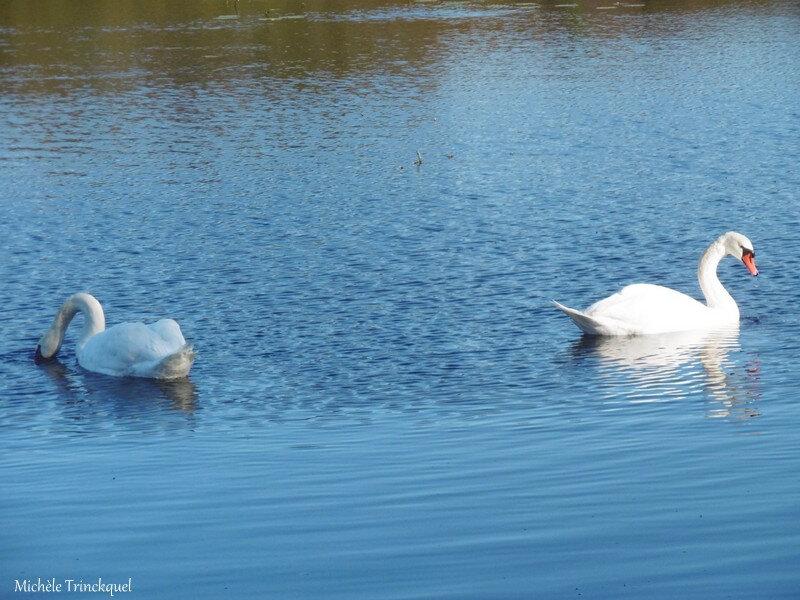 Balade au Lac 171118