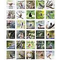 Tous les oiseaux que j'ai pu voir dans notre jardin ...