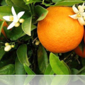 Mon obsession pour l'orange!