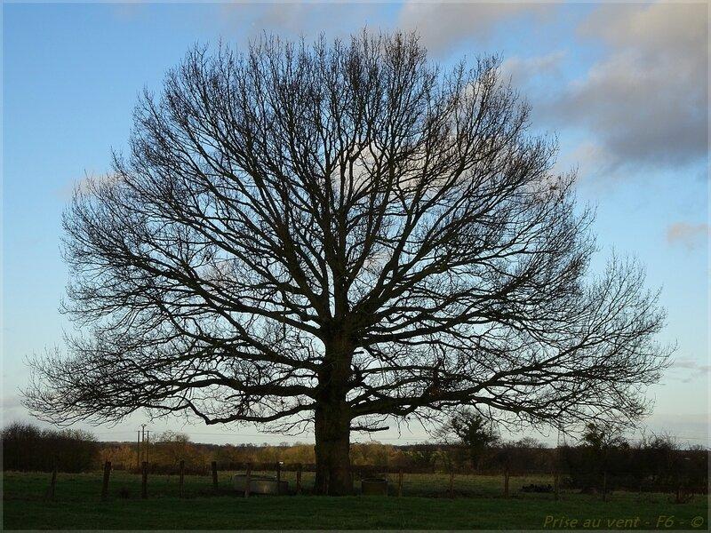 Son arbre - 3