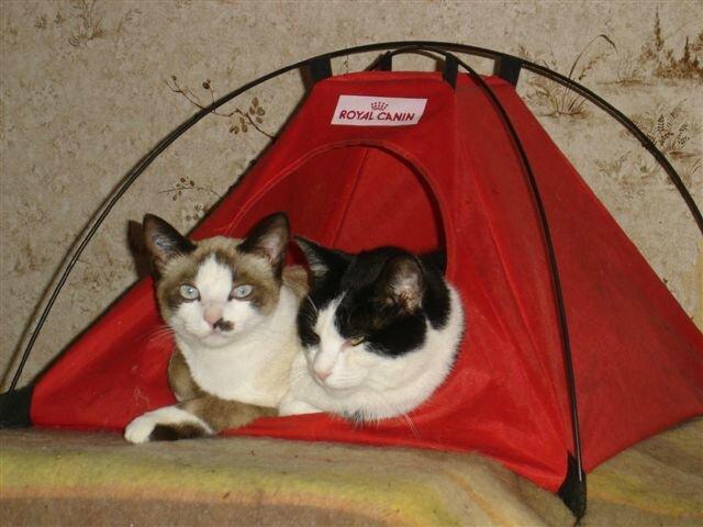 Coco et Mimile