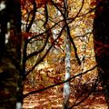 .....la forêt ...