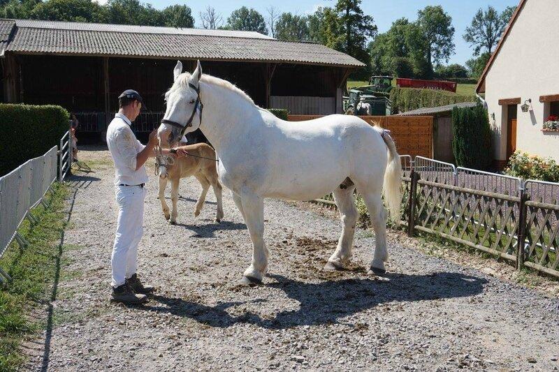 Ursule 77 - 18 Juin 2017 - Concours élevage local - Hucqueliers (62) - 1ere (Suitées)