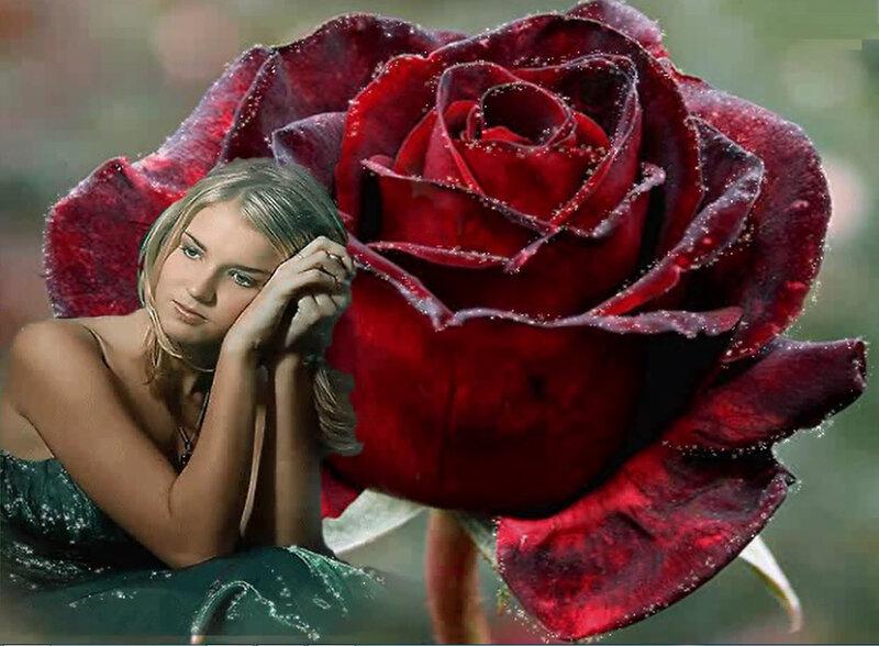 accroche j en ai tro vu secret garden lament frozen flower