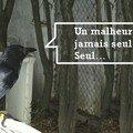 Saint-aignan-le-jaillard, un matin…
