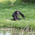 la vallée des singes 0501