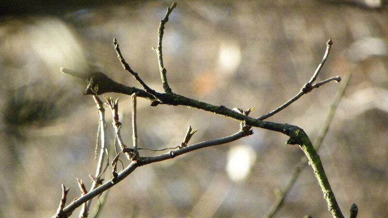 branches et feuilles 7