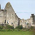 Le Cotentin, terre d'accueil des cigognes.