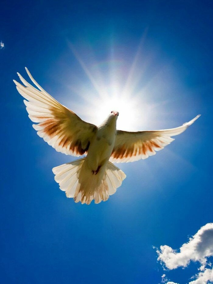 Préparez-vous à pénétrer le monde Magnifique des prières qui guérissent !