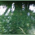 Arros Ricaud 05061510