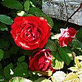 Balade vers Lac et Lavoir + mes roses 060518