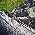 2012_05260370_sentier des dieux_col de la serra