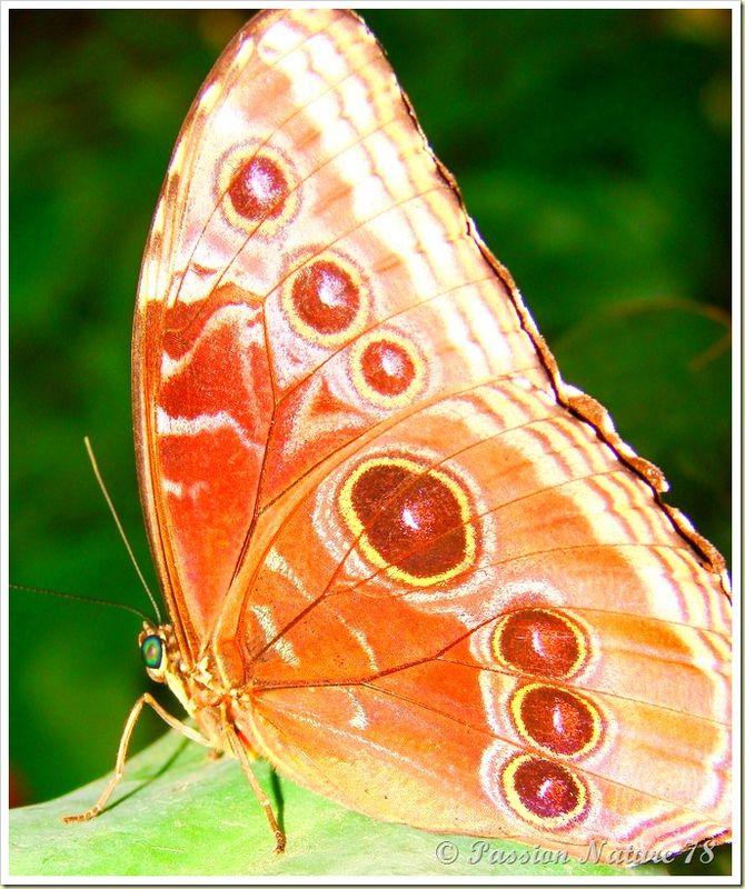 Les papillons (16)