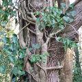 L'arbre amoureux
