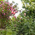 fleurs-urbaines3