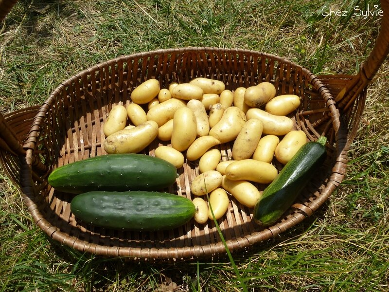 2018-07-02 Pommes de terre-concombres-courgette