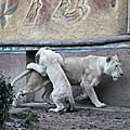 Amneville zoo 26