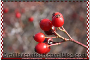 Confiture_Cynorohodons_02