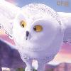 FC006