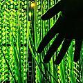 Forêt noire : les élus locaux perdent la trace de la fibre optique