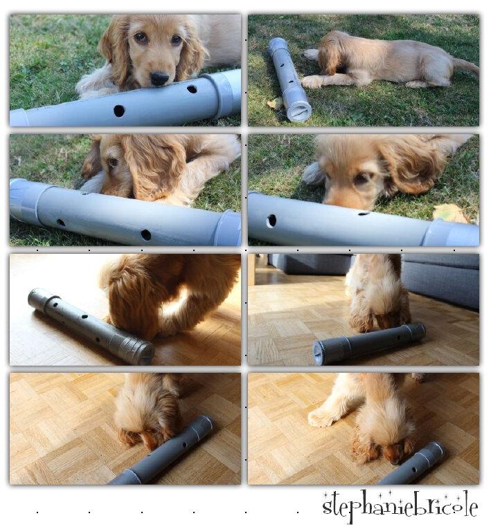 jeu pour chien diy