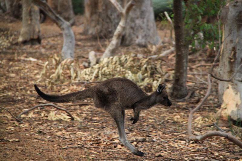 Australie 2014 - 288