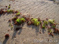algues vertes et rouges