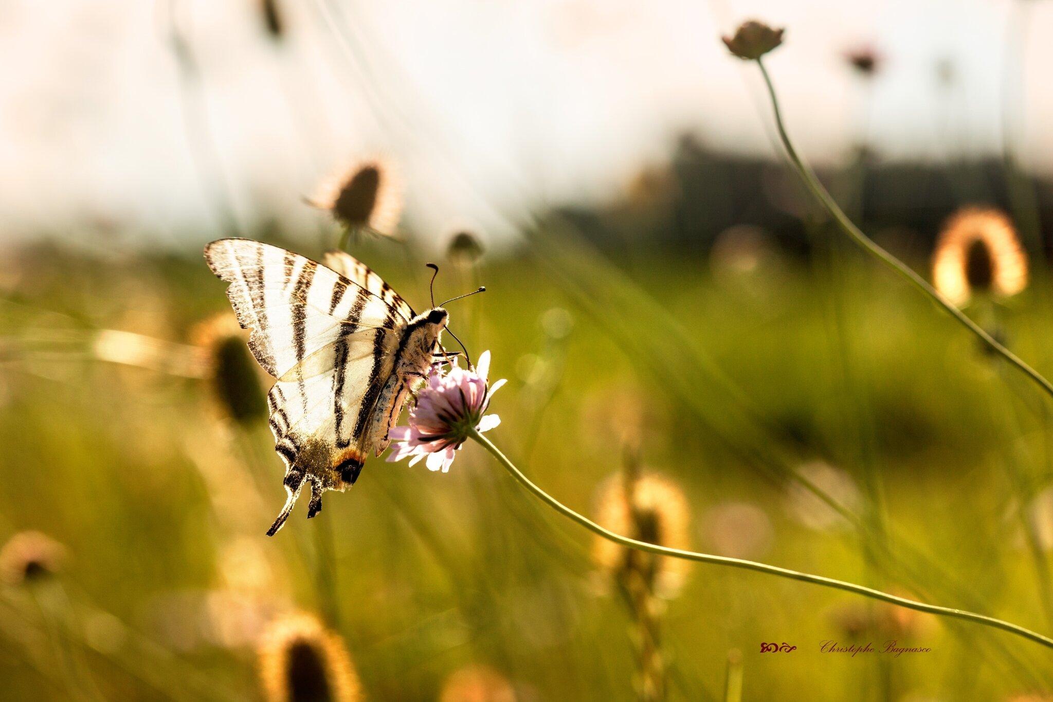 Fleurs d'ailes et de lumière