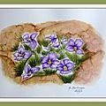 63 - violettes du teide (novembre 2009)
