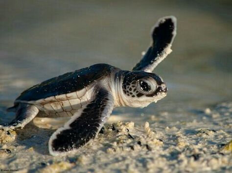 tortue_23