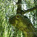 Lundi 12/09/11 arbres