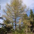 2008 04 26 Un arbre et un temps magnifique